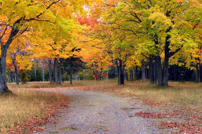 Autumn Day em Michigan fotografia de stock royalty free