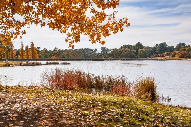 Download Autumn day at the lake stock photo. Image of reeds, orange - 92628126