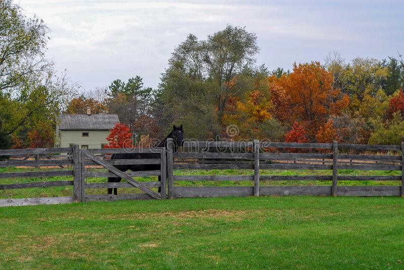 Autumn Day på den gamla världen Wisconsin med en svart häst arkivfoto