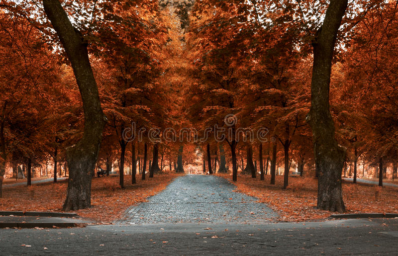 Autumn day in the park stock photos