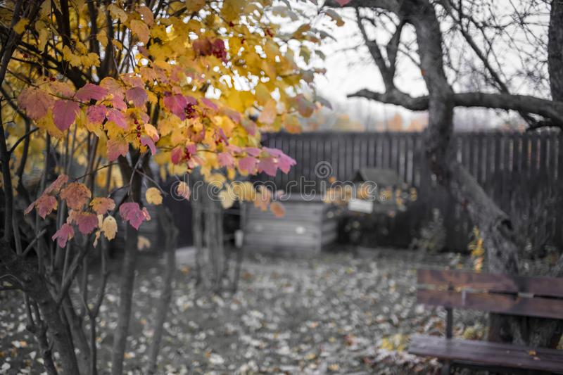 Autumn day village wood fence tree branch yellow leaves. Garden royalty free stock images