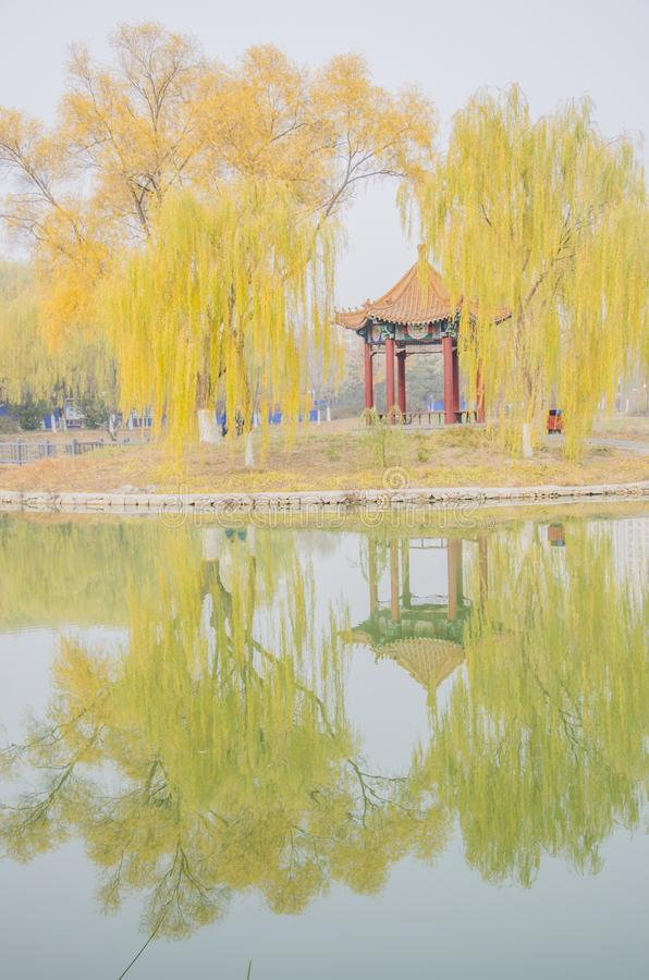 Autumn days in lake. In late autumn, the plants in park all turn yellow and red stock photos