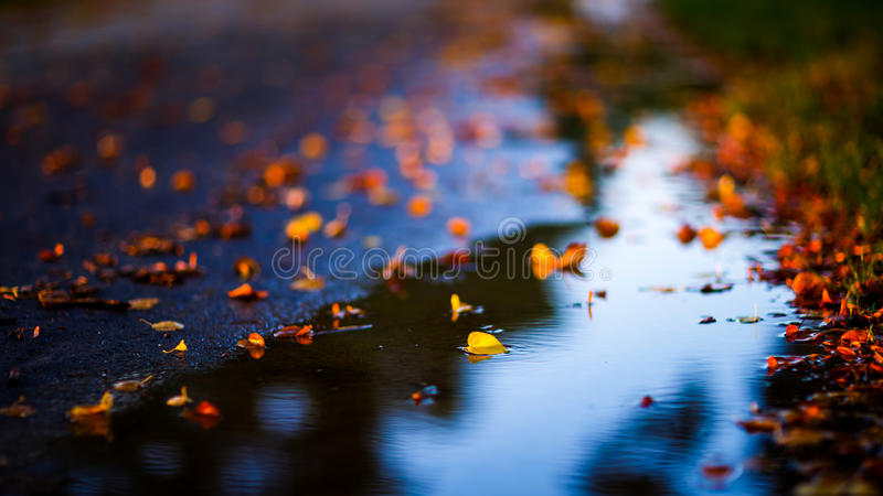 Autumn days royalty free stock images