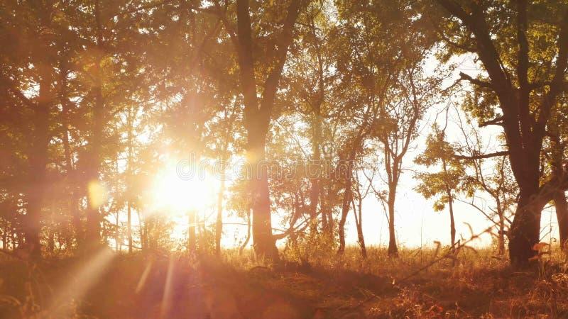 Autumn Deciduous Forest At Dawn eller soluppgång arkivfoton