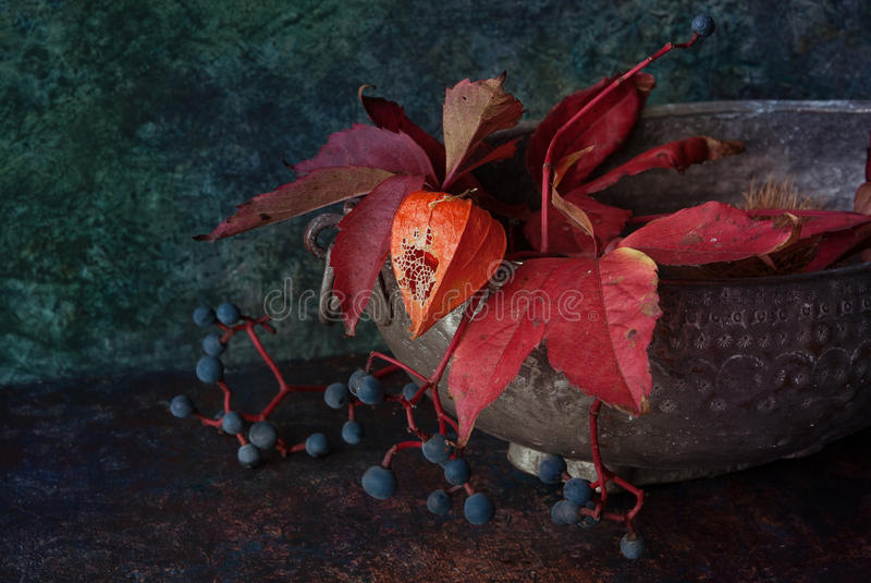 Download Autumn decor with physalis stock photo. Image of autumn - 99210490
