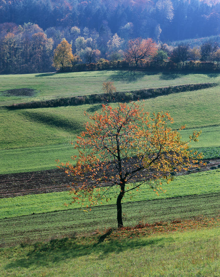Download Autumn decoration stock photo. Image of autumn, scenic - 19963094
