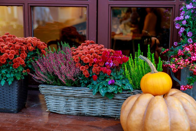 Autumn decoration. Pumpkin and flowers in baskets royalty free stock photography
