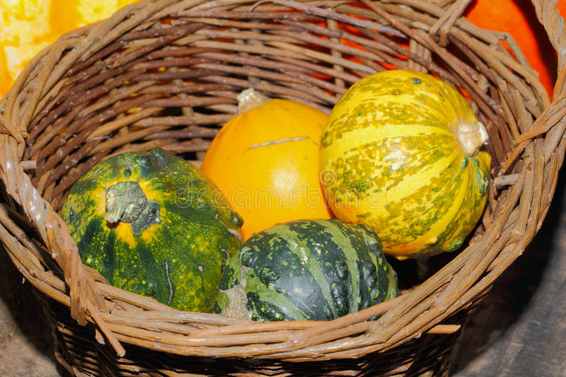 Autumn decoration, pumpkin, gourd royalty free stock images