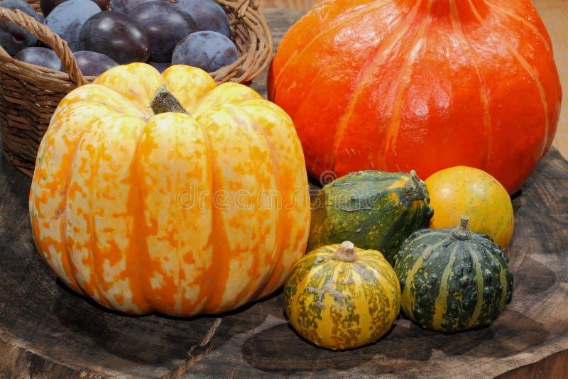 Autumn decoration, pumpkin, gourd, plums stock photos