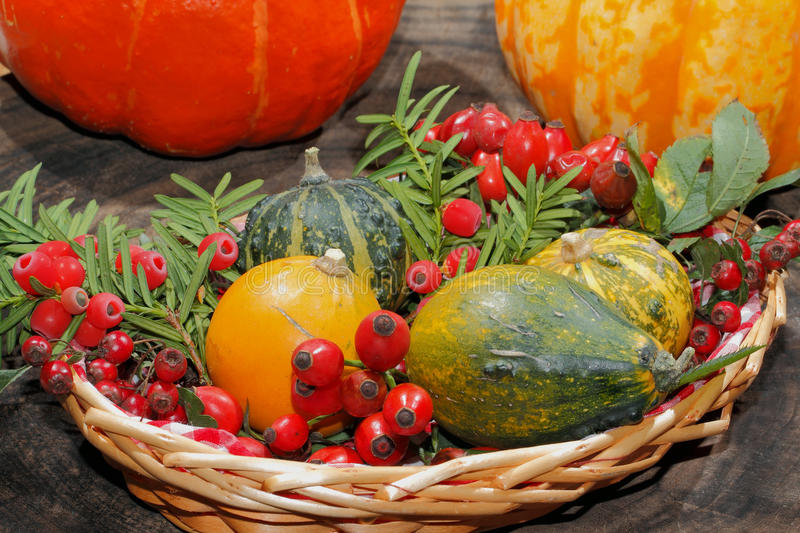 Autumn decoration, pumpkin, gourd, rose hips, berries. Of mountain ash and yew in a basket royalty free stock image