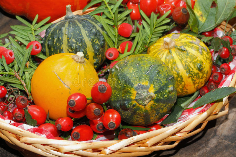 Autumn decoration, pumpkin, gourd, rose hips, berries. Of mountain ash and yew in a basket stock photos