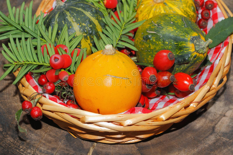Autumn decoration, pumpkin, gourd, rose hips, berries. Of mountain ash and yew in a basket stock image