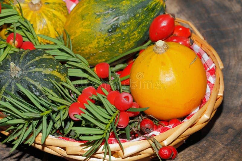 Autumn decoration, pumpkin, gourd, rose hips, berries stock images