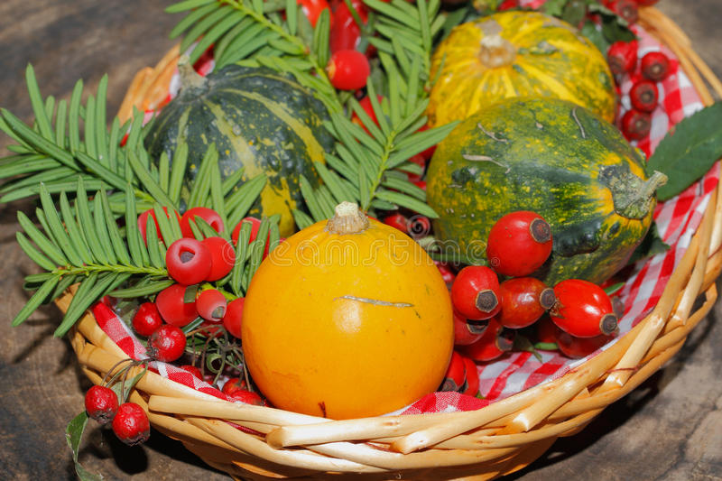 Autumn decoration, pumpkin, gourd, rose hips, berries. Of mountain ash and yew in a basket stock images