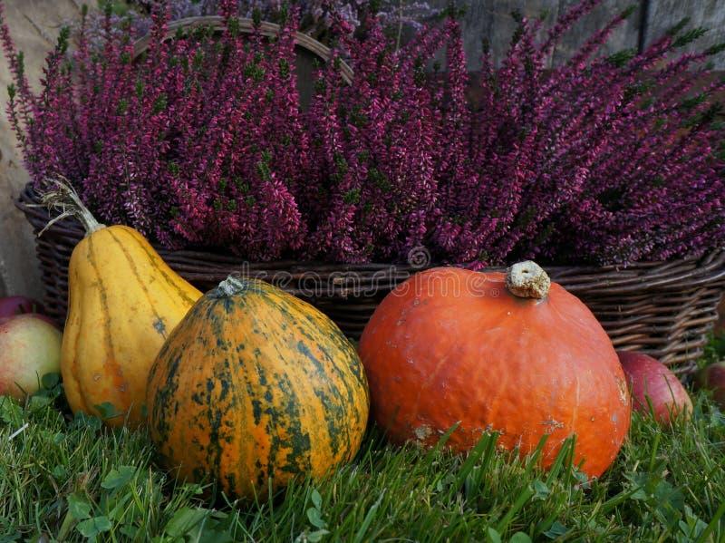 Autumn decoration, pumpkins, squash, heather flowers and apples stock image