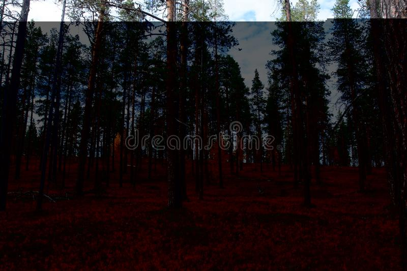 Autumn in Deep Taiga Forest, Finland stock photography