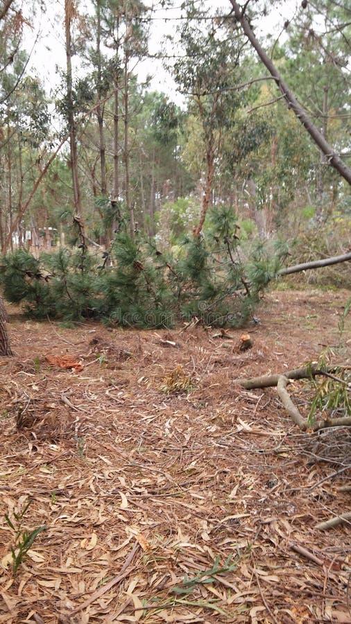 Autumn Deforestation in Canelones, Uruguay stockfotografie