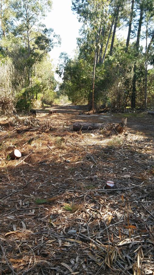 Autumn Deforestation in Canelones, Uruguay lizenzfreie stockfotos