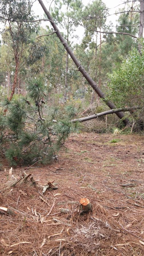 Autumn Deforestation in Canelones, Uruguay fotografia stock