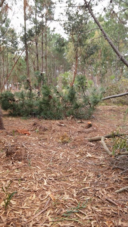 Autumn Deforestation em Canelones, Uruguai fotografia de stock