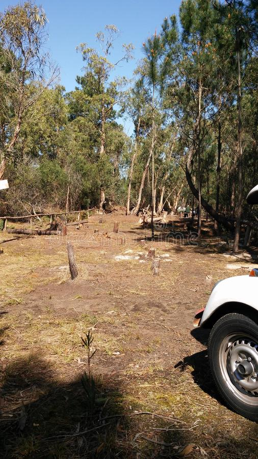 Autumn Deforestation em Canelones, Uruguai imagem de stock royalty free