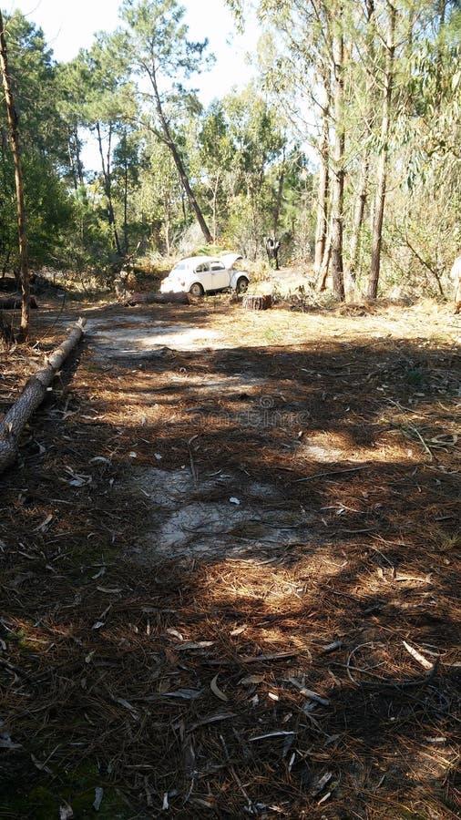 Autumn Deforestation en Canelones, Uruguay fotografía de archivo