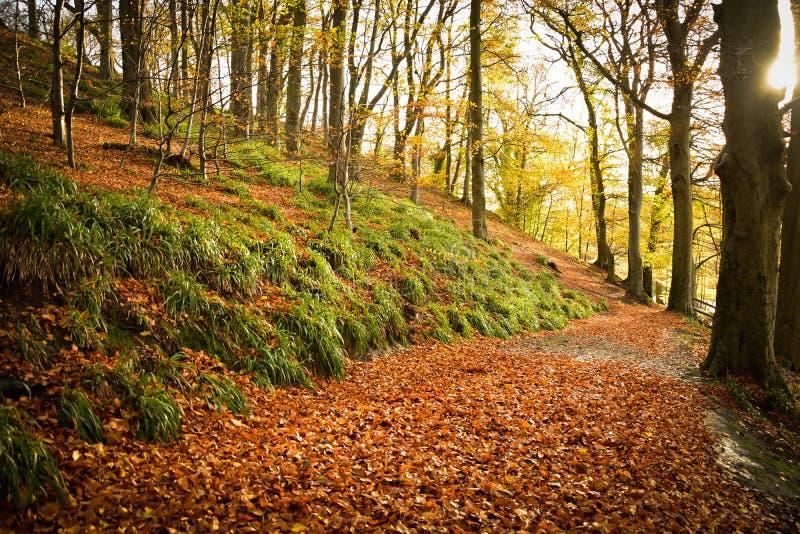 Autumn Delight image stock