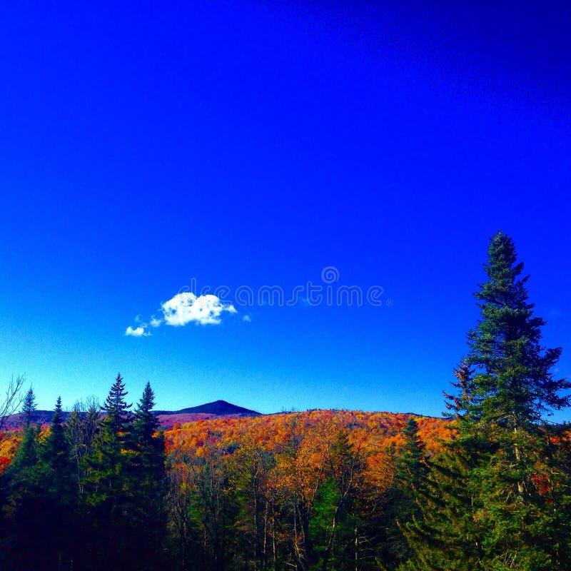 Autumn Delight stock image