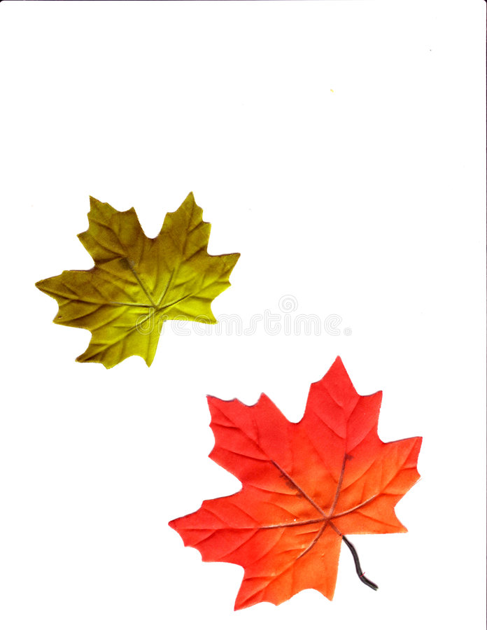 Autumn Design. An autumn design background with leaves of fall colors royalty free illustration