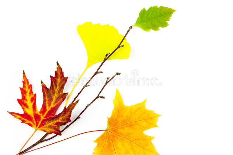 Autumn Design Element  / Beautiful Real Leaves Stock Images