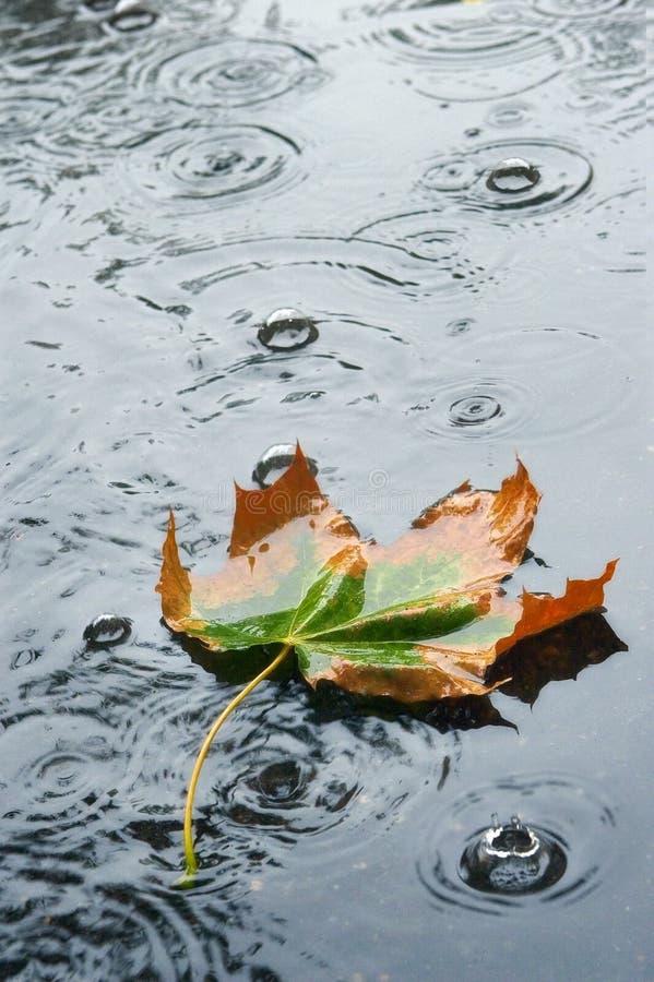 autumn deszcz obrazy royalty free