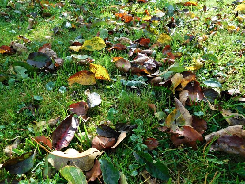 The autumn detail leaves in green grass and background royalty free stock photos