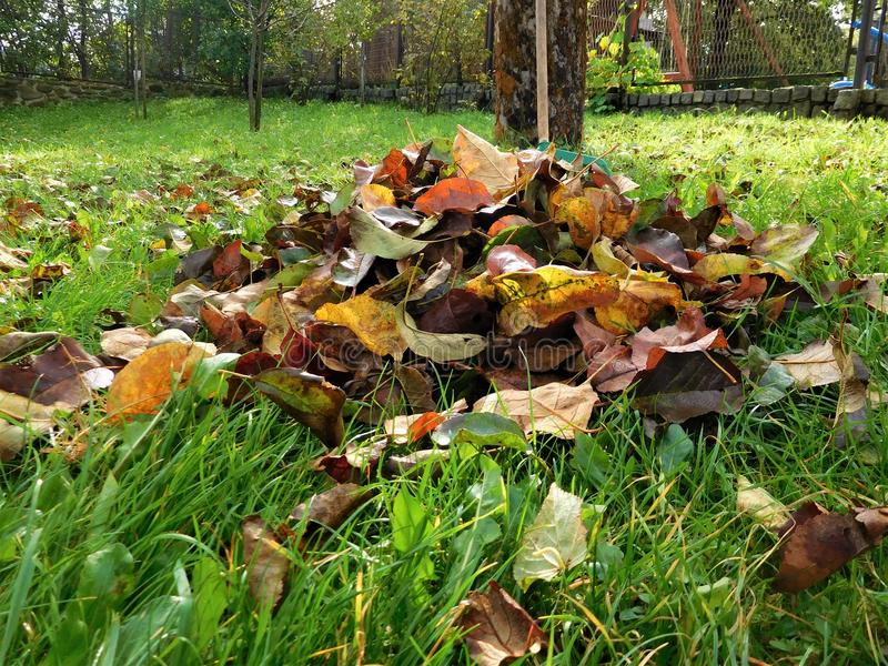 The autumn detail leaves in green grass and background royalty free stock photo