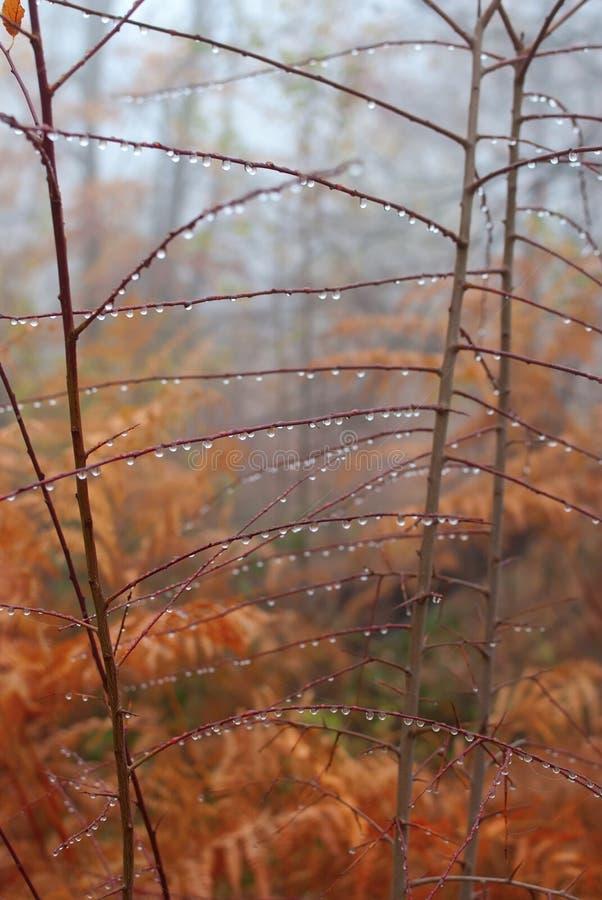 Autumn dew on branch with raindrop