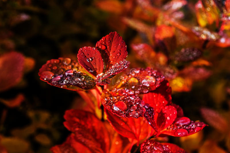 Autumn dew royalty free stock images