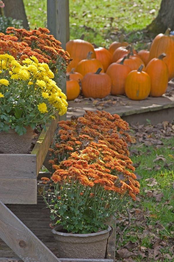 Free Autumn Display Stock Photos - 1347253