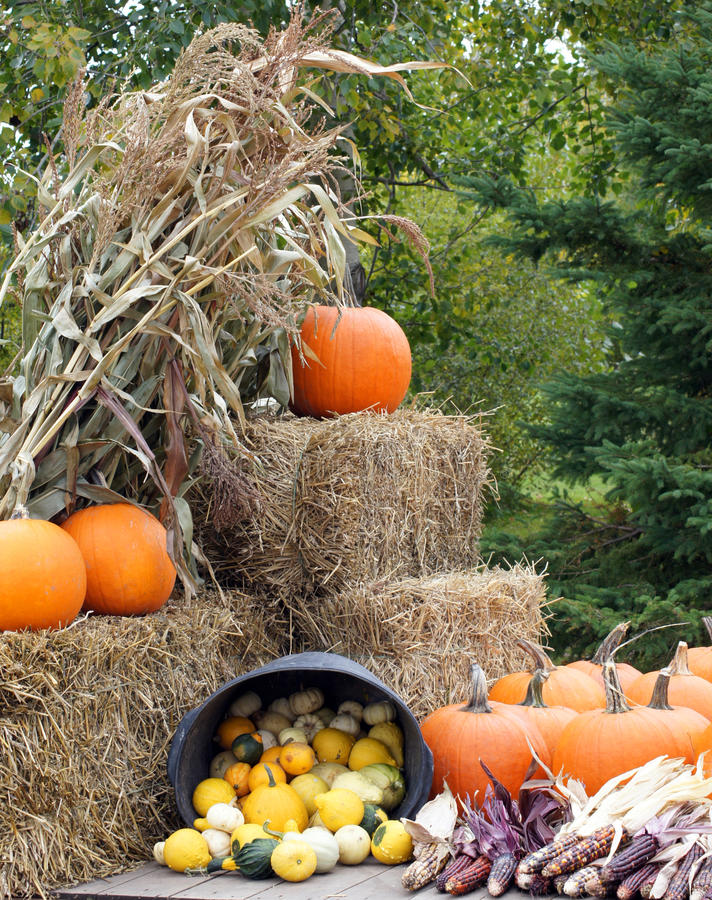 Download Autumn display stock photo. Image of agriculture, harvest - 15445774
