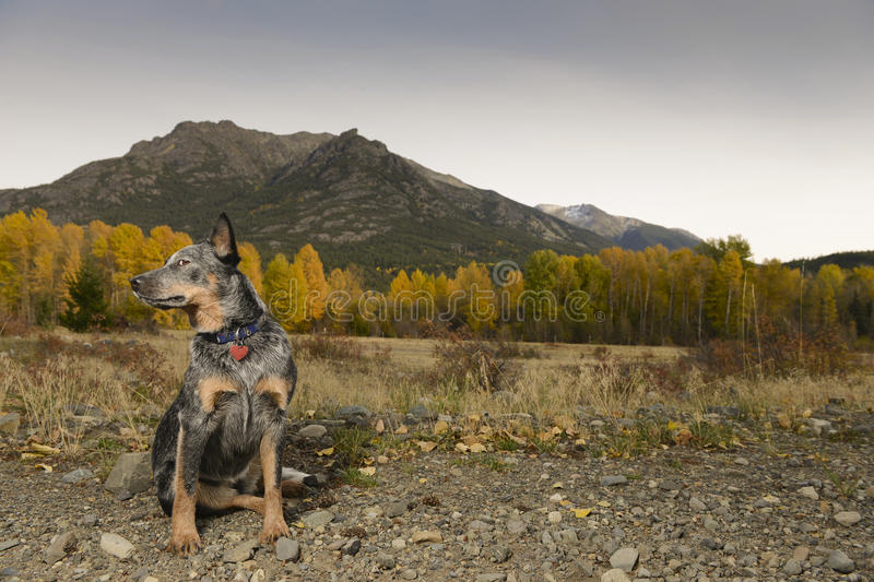 Download Autumn dog stock photo. Image of landscape, ranch, leaves - 34334808