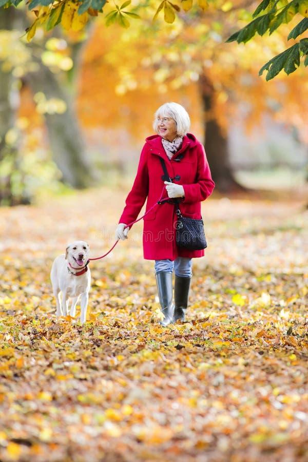 Autumn Dog Walk stockfoto