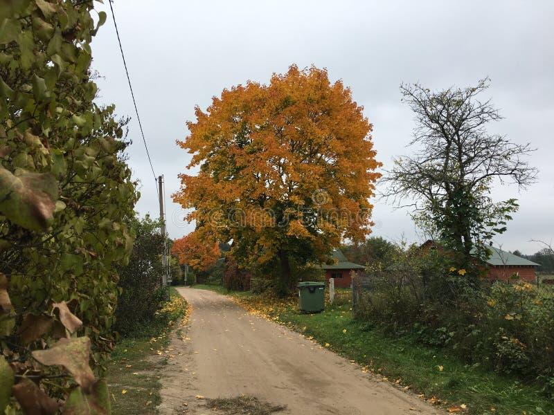 autumn dostępne drzewny ilustracyjny wektora zdjęcie royalty free