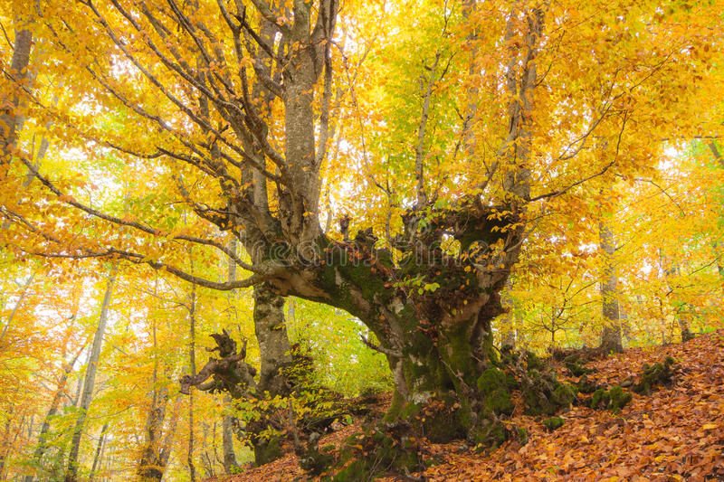 Autumn dreams royalty free stock images