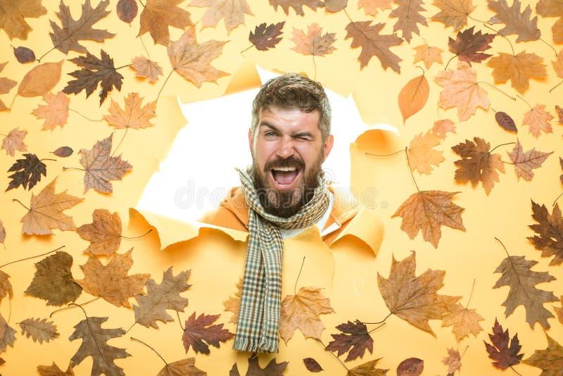 Autumn Dress. Portrait of autumn man. Space for your text. Stylish bearded man. November background. Men fashion autumn stock photography