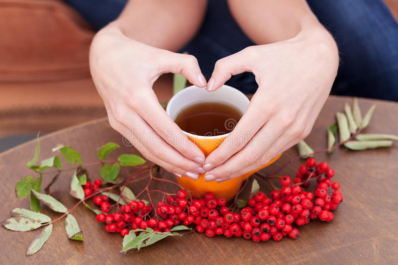 Autumn drink. Heart-shaped fingers on the top of a tea cup royalty free stock photo