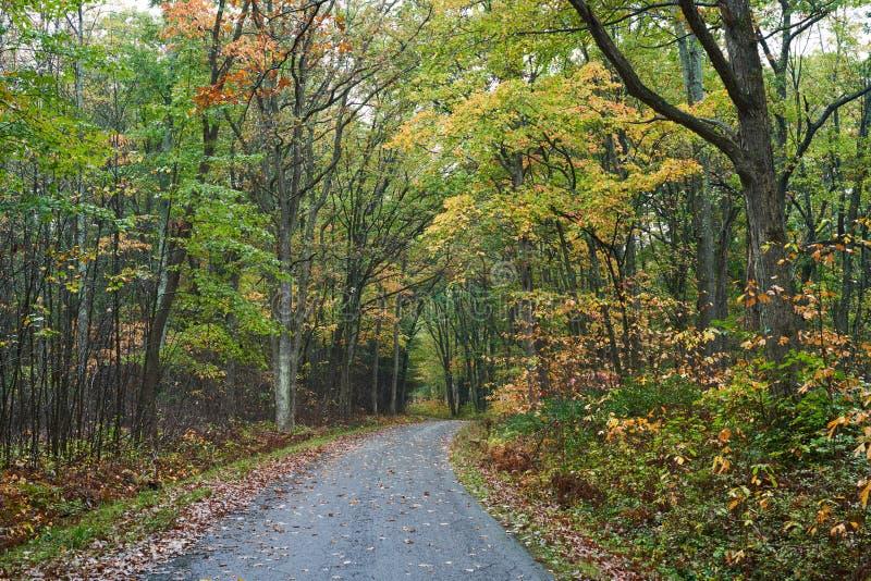 Autumn Drive door het Bos stock afbeeldingen