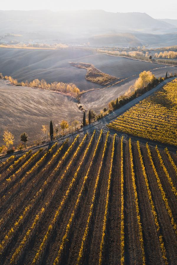 Autumn drone view of vineyards in Italy at sunset. Autumn view of italian vineyards in golden orange colors at sunset. Drone aerial photo. Famous Tuscany hills stock photo