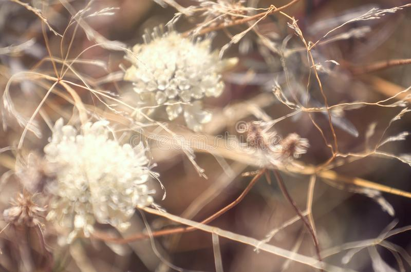 Autumn dry grass flowers background in brown and light colors, seasonal nature scene stock photography