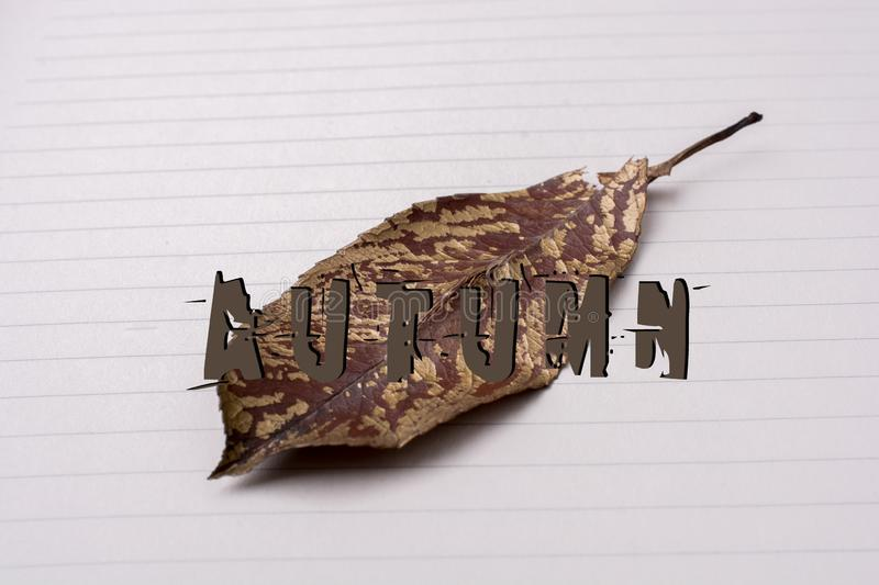 Autumn dry leaf on white paper background stock photo