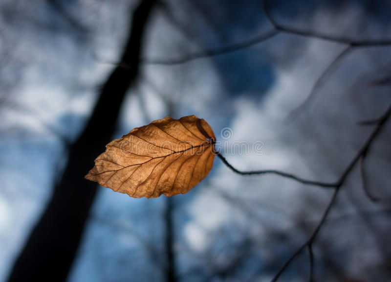 Autumn dry leaf in the wind stock photos