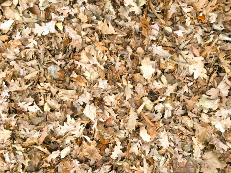 Autumn dry maple leaf seamless pattern. Leaves background texture. royalty free stock photography