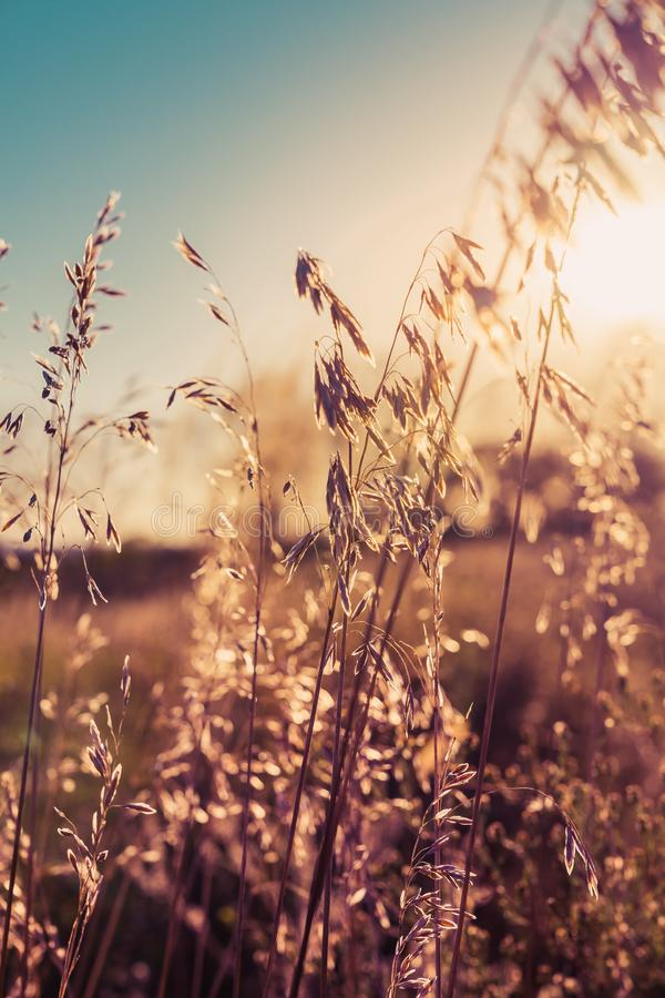 Autumn dry plants on meadow with sunlight stock photos